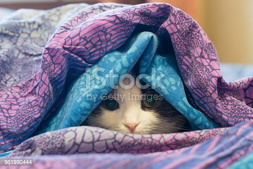 Photo of a cat wrapped in a colorful blanket