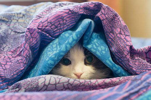 Photo of a cat wrapped in a blanket
