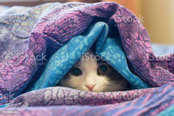 Photo of a cat wrapped in a blanket picture id951990444?b=1&k=6&m=951990444&s=612x612&h=o8rwt1mbhydh79vtyujnsajubvy0gewns s1ygpatow=