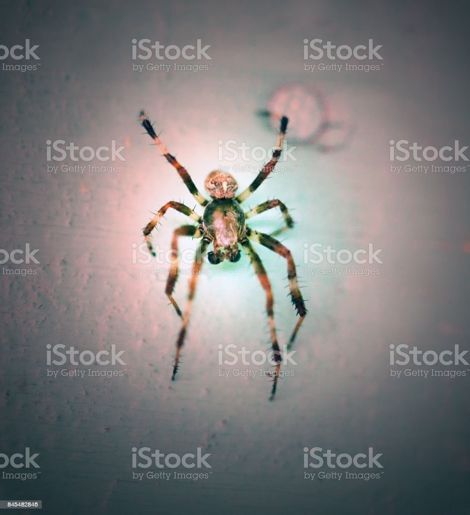 Photo of a close-up of a large striped spider stock photo