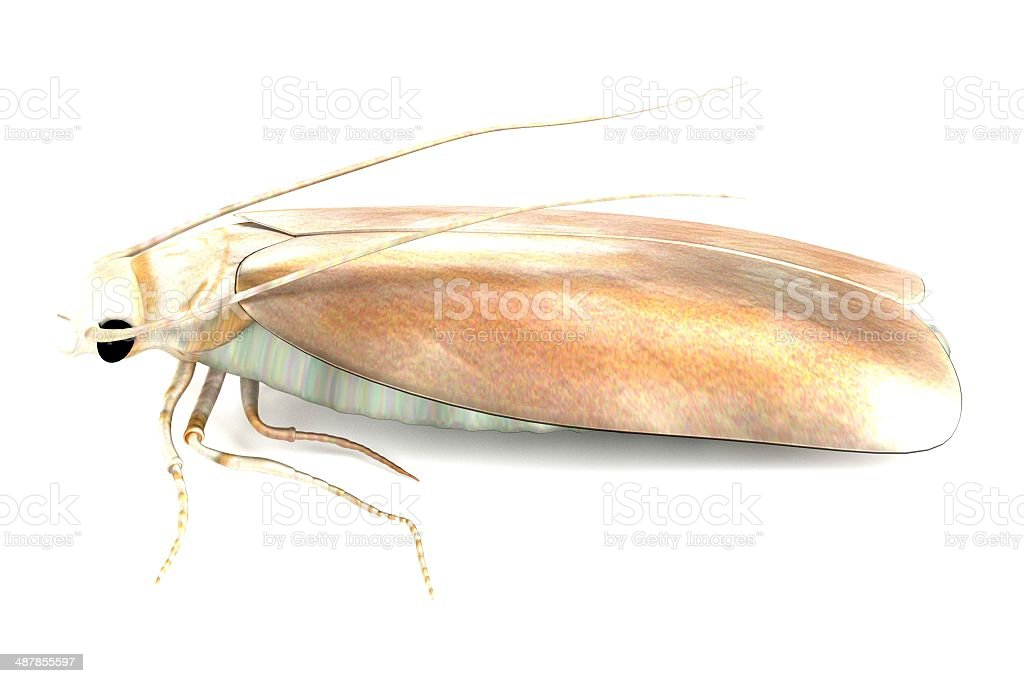 Photo of a clothes moth on a white background stock photo