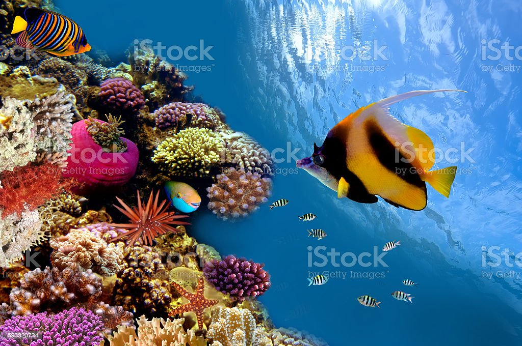 Photo of a coral colony on a reef top stock photo