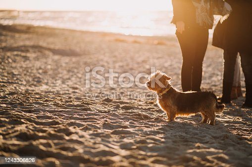 a dog at the beach sunset