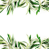 A photo of a frame of olive tree branches and leaves with a place for text, shot from the top on a white background with copyspace