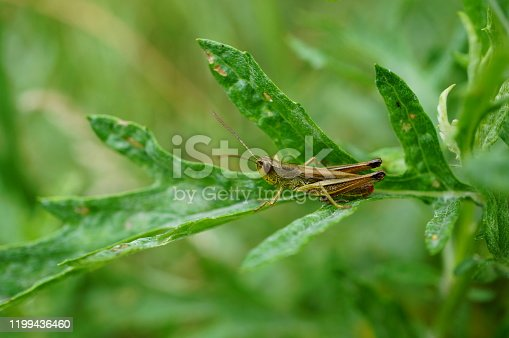 Photo of a grasshopper in nature. Beautiful wild flowers and green grass. Peaceful landscape. Summer. Beauty of nature. Bright color images . Macrophotography of insects. Amazing and fabulous images of nature.