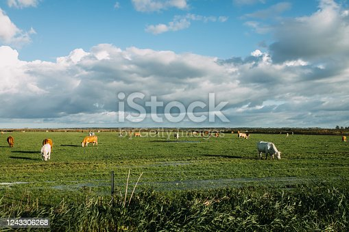 a green field with cows