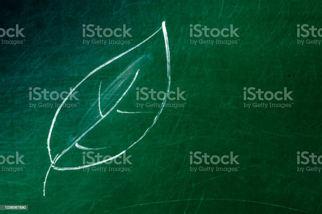 A photo of a leaf drawing made with chalk on a green board, with copy...
