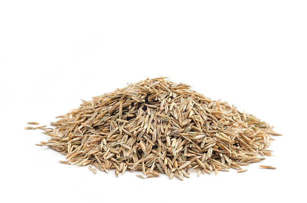 photo of a neat pile of grass seed before a white background - seed stock photos and pictures