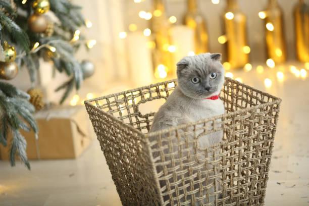 photo d'un cadeau du nouvel an d'un animal familier doux pelucheux de chaton - cage animal nuit photos et images de collection