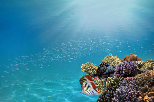 Photo of a tropical Fish on a coral reef stock photo