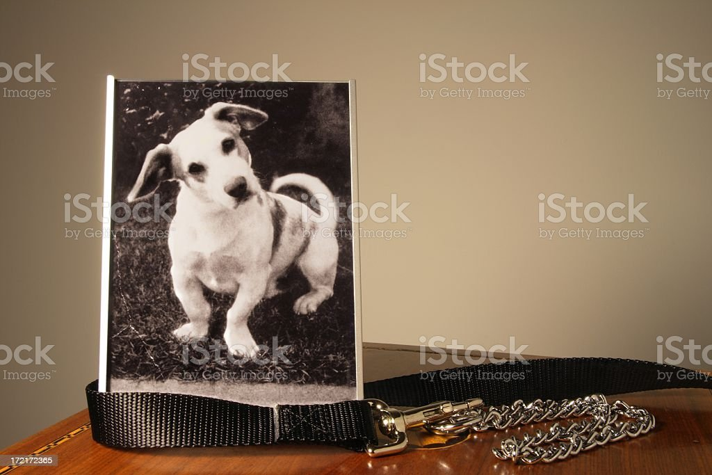 Photo of a white dog in a frame next to collar on a table royalty-free stock photo