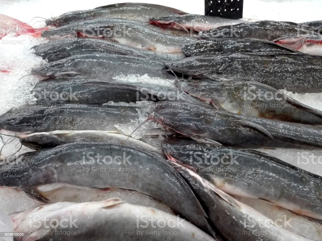 A photo of Catfish fish that were cut for sale, closeup stock photo