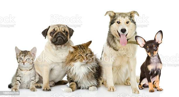 Photo of cats and dogs in multiple breeds and sizes picture id166540725?b=1&k=6&m=166540725&s=612x612&h=kugzakelvj8nqssfnt1imsuz5gugrz77vks4fi398uy=