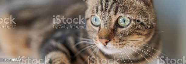 Photo of cute cat picture id1127785673?b=1&k=6&m=1127785673&s=612x612&h=hw1j8hirc6q9t3idbcjuonoyixo1xz f8u3c11eyk0w=