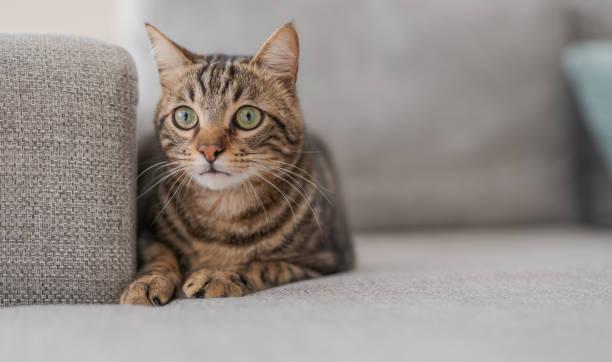 Photo of cute cat picture id1127785722?b=1&k=6&m=1127785722&s=612x612&w=0&h=g2sy5z0r8bu iqvyekcxtxchvekln5jorctl9ef2hlq=