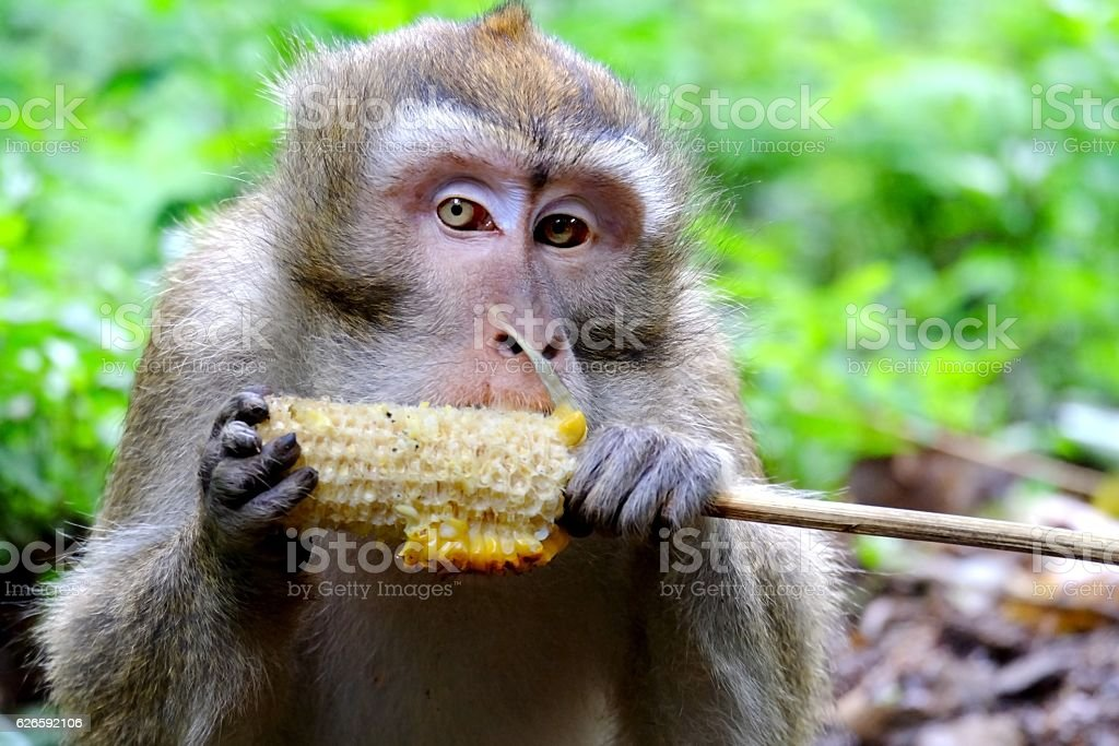 photo of cute long-tailed monkeys stock photo