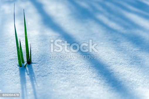 istock Photo of Early Spring, Frozen grass close up 639394478