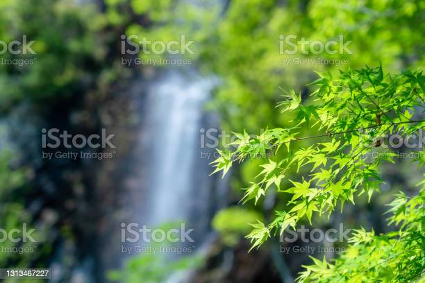 Photo of A photo of early summer with beautiful fresh greenery and waterfalls