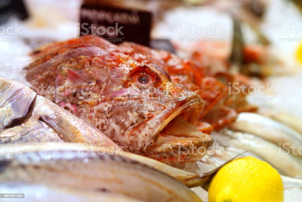 Photo of fish in ice stock photo