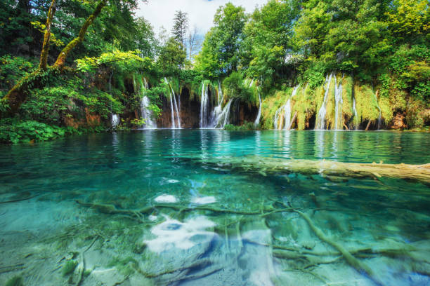 A photo of fishes swimming in a lake, taken in the national park Plitvice, Croatia stock photo