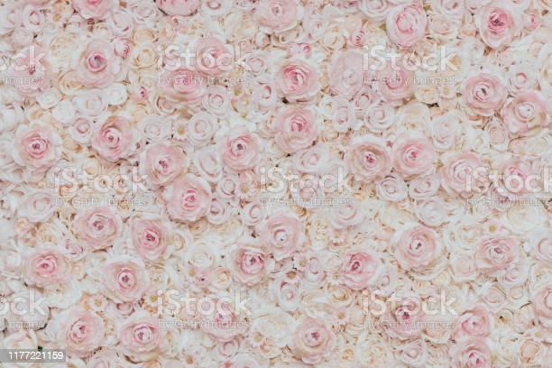 Photo of floral wall picture id1177221159?b=1&k=6&m=1177221159&s=612x612&h=2ueoww imf yrvbdan10p1f4cjjqgazeq3wpe1xzvqc=