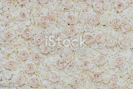 Rose - Flower, Spring, Photo of floral wall