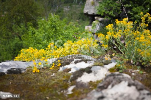 Closeup photo of grass and flowers on high cliff