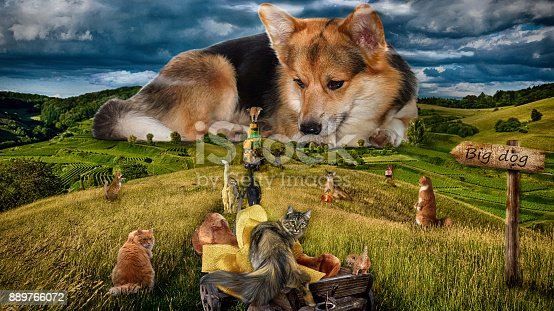 istock Photo of humor. Big dog. Cats from all around the city gathered to congratulate the dog with the Year of the Dog. 889766072