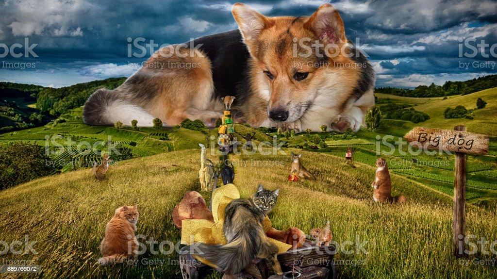 Foto de humor. Perro grande. Gatos de toda la ciudad se reunieron para felicitar al perro con el año del perro. - foto de stock