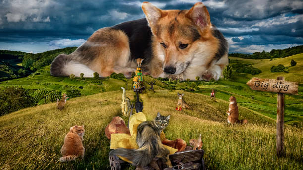 Photo of humor. Big dog. Cats from all around the city gathered to congratulate the dog with the Year of the Dog. stock photo