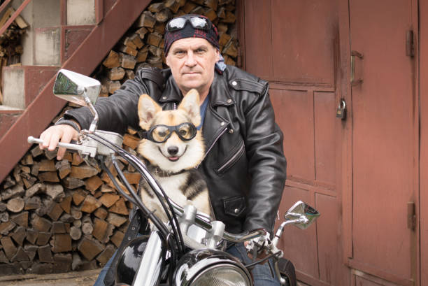 photo d'humour. le motard et son chien sont assis sur une moto. - moto sport photos et images de collection