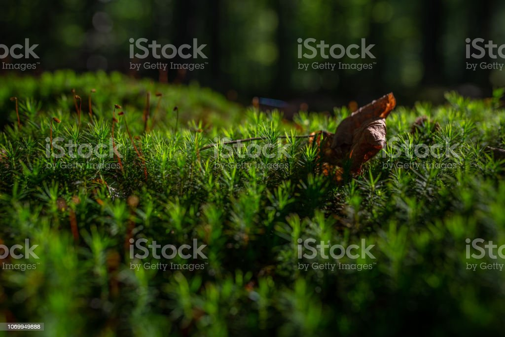 photo of Mossy green meadow in autumn forest with sunlight stock photo