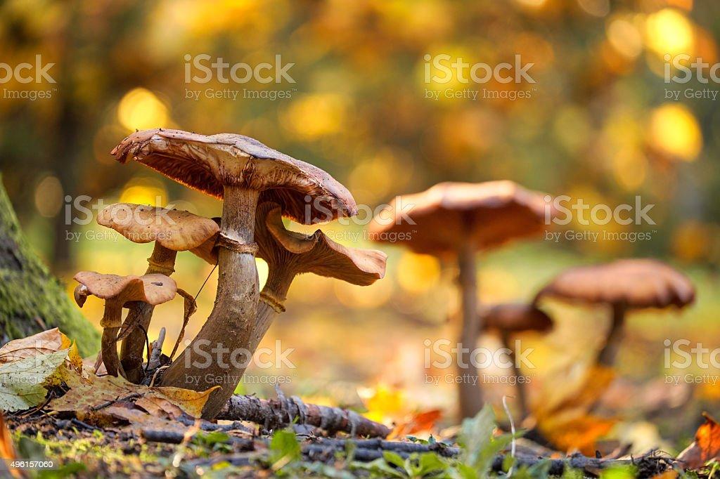 Photo of mushrooms stock photo