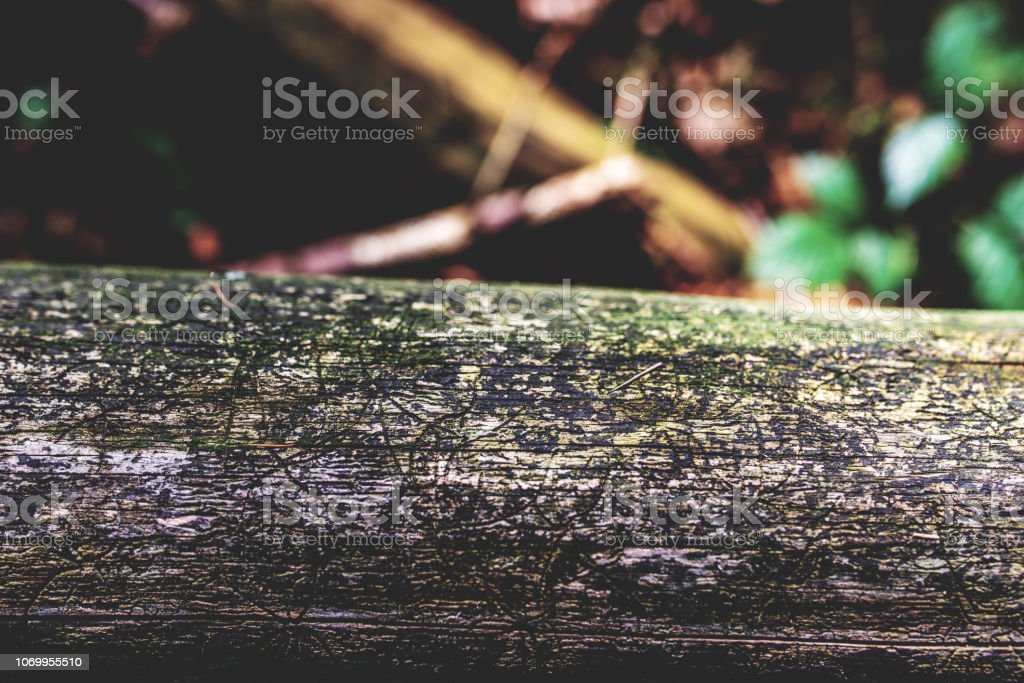 photo of old rusty log with forest as background stock photo