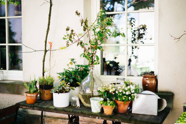 photo of plant on a table in the garden stock photo