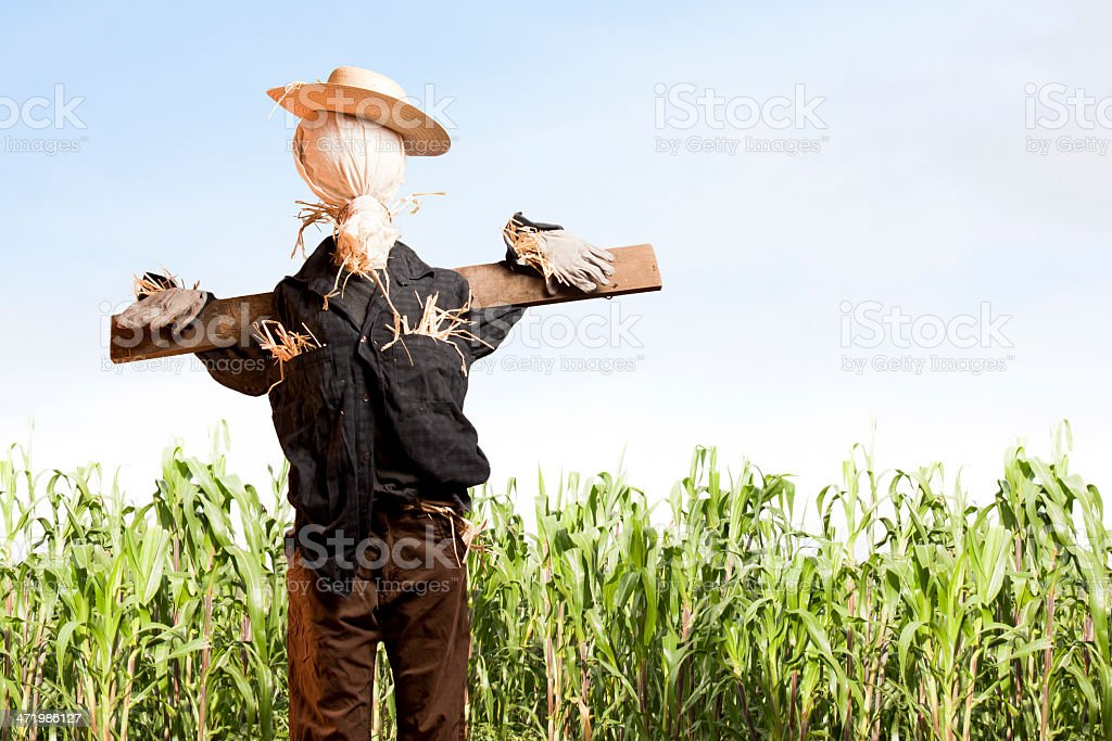Photo of scarecrow in corn field on a sunny day stock photo