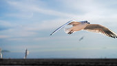 Photo of seagull flying in the air