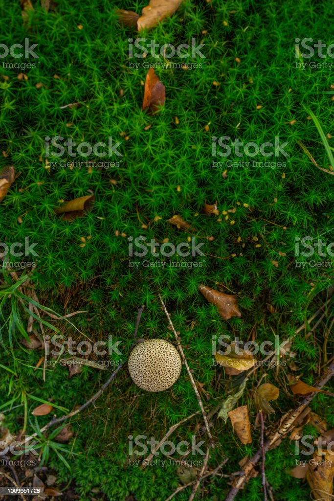 Photo of Small mushroom in the forest on green moss. Top view. stock photo