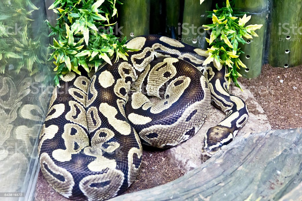 Photo of snake close up in zoo – zdjęcie
