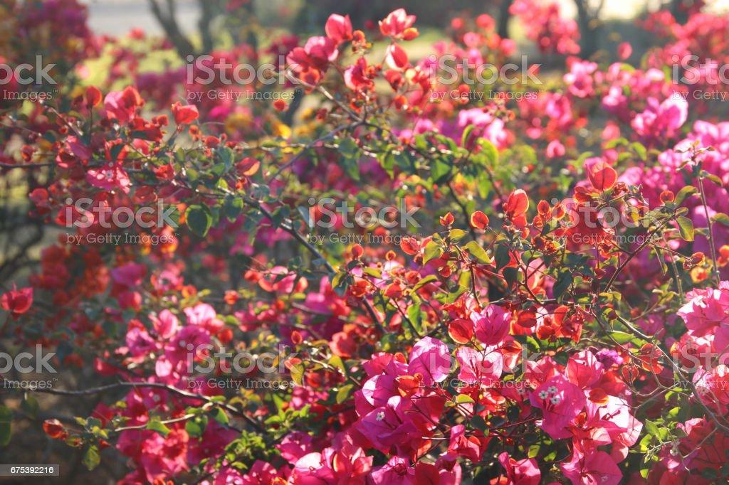 photo de prairie de printemps avec les fleurs sauvages. photo libre de droits