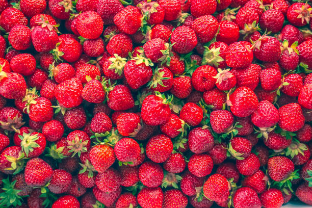 Photo of strawberries.  Photo from Finland. Photo of strawberries.  Photo from Finland. strawberry field stock pictures, royalty-free photos & images