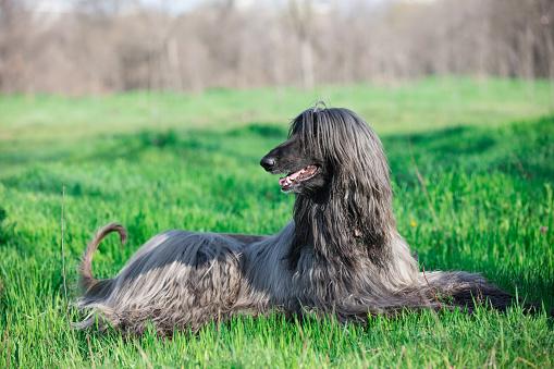 istock photo of the dog 522797300