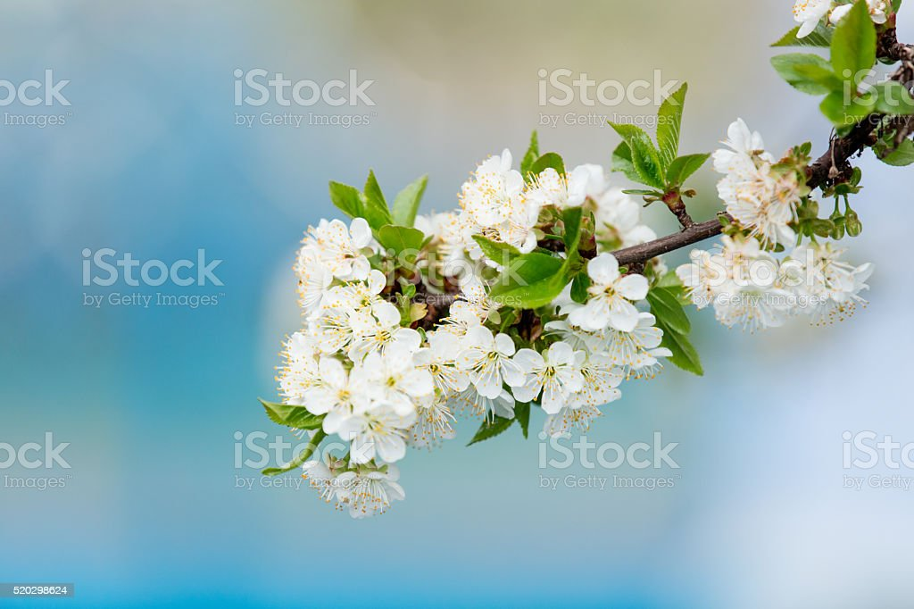photo of the peach branch stock photo