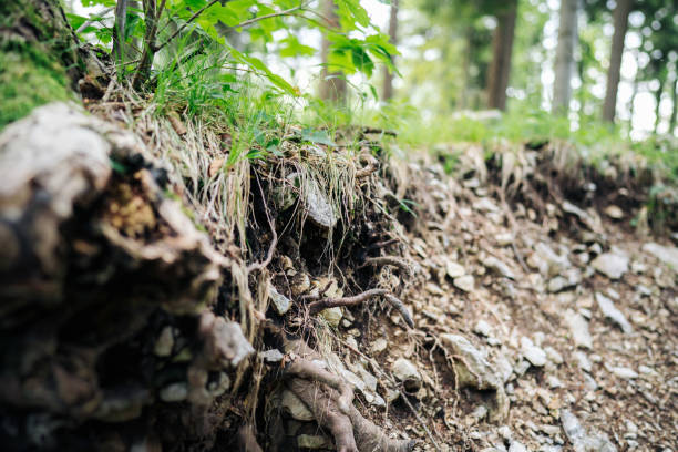 photo of tree roots in the nature stock photo