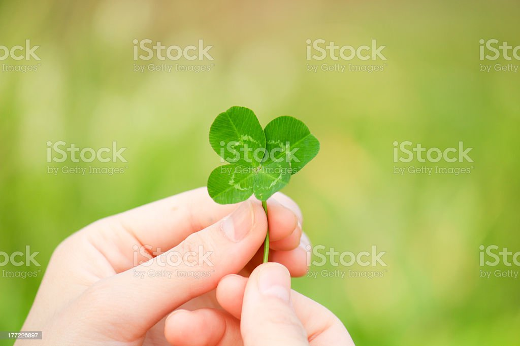 Photo of two hands holding up a green four leaf clover stock photo