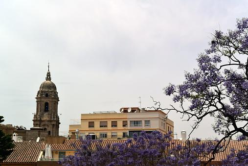 Photo of views of the historical part of the city from the fortress of Alcazaba. Photo of Santa Iglesia Catedral Basílica de la Encarnación