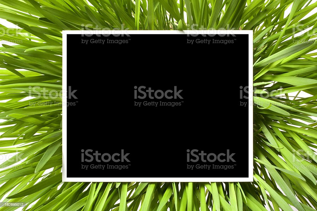 Photo on the grass. royalty-free stock photo