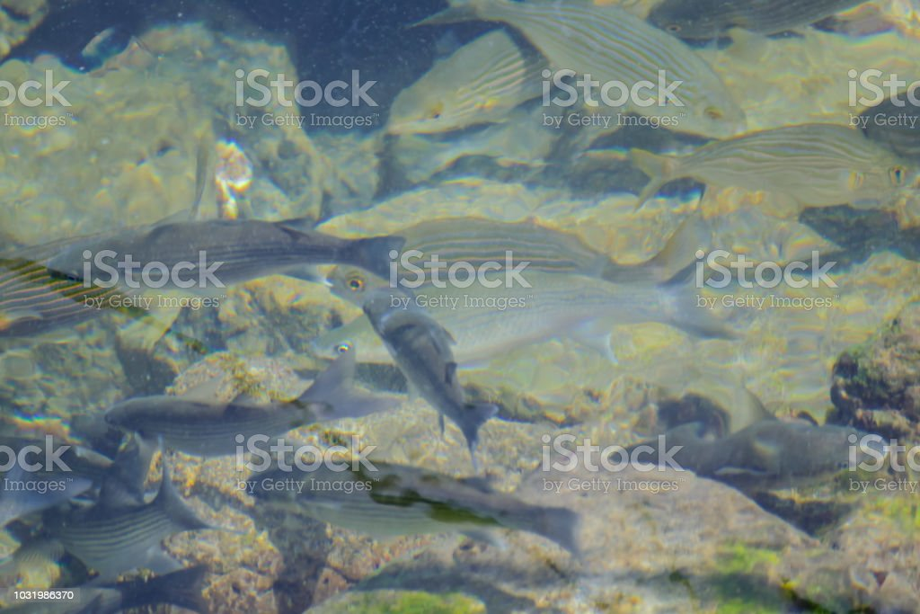 Photo Picture Image of many fishes pisces, fishes bacground stock photo