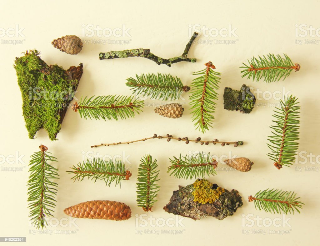 Photo taken in the summer. Set of forest elements on a flat background - pine branches, cones, bark, moss stock photo