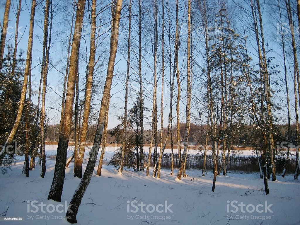 photo with a winter landscape background lake in the woods stock photo